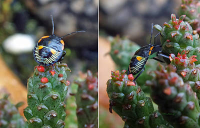 Photograph - Little Beetle On Succulent Plant by Duane McCullough