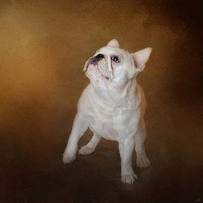 Little Beggar - White French Bulldog Art Print
