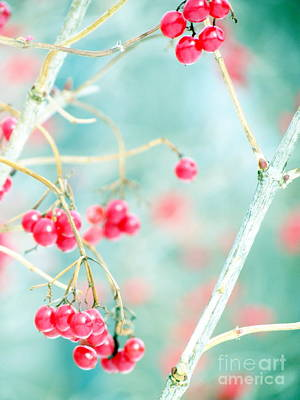 Photograph - Little Berries by France Laliberte