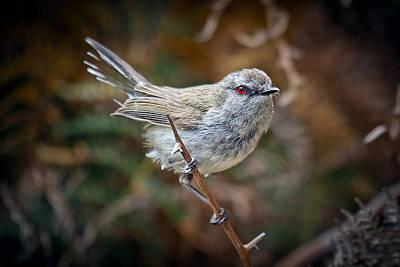 Photograph - Little Bird by Brad Grove
