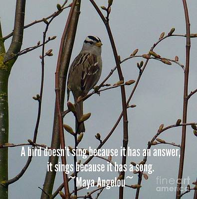 Photograph - Little Bird Quote  by Susan Garren
