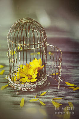 Photograph - Little Birdcage With Flowers by Sandra Cunningham