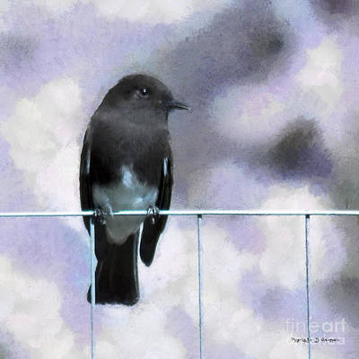 Digital Art - Little Black Phoebe by Rhonda Strickland