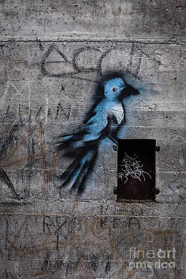 Cement Photograph - Little Blue Bird Graffiti by Edward Fielding