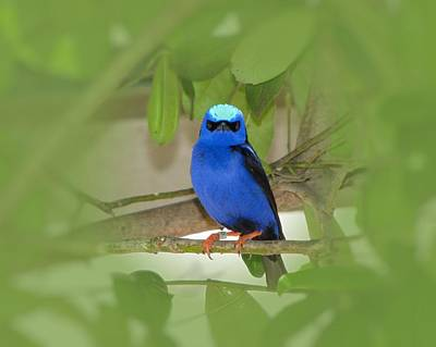 Photograph - Little Blue Bird by MTBobbins Photography