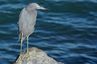 Photograph - Little Blue By The Sea by Bradford Martin
