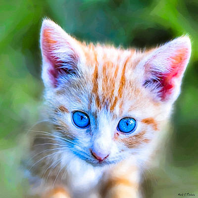 Photograph - Little Blue Eyes  - Orange Tabby Kitten by Mark E Tisdale
