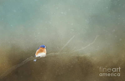 Photograph - Little Blue In Snowfall by Pam  Holdsworth