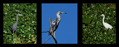 Photograph - Little Blue Triptych by Dawn Currie