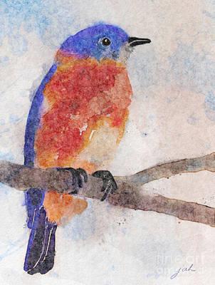 Little Bluebird Art Print by Joan A Hamilton