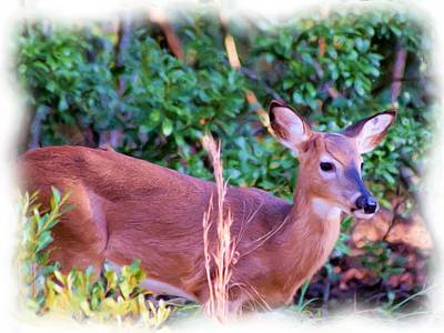 Photograph - Little Buck Stepping Out by Sheri McLeroy