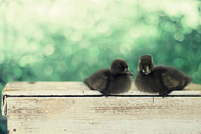 Ducklings Photograph - Little Buddies by Amy Tyler