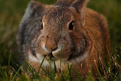 Little Bunny Foo Foo Art Print by Mike Flynn