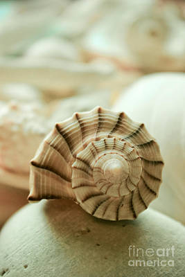 Photograph - Little Conch Shell by Colleen Kammerer