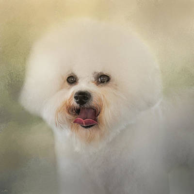 Photograph - Little Cotton Ball - Bichon Frise by Jai Johnson