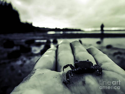 Photograph - Little Crab 1 by Arlene Sundby