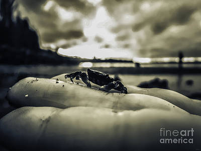 Photograph - Little Crab 2 by Arlene Sundby