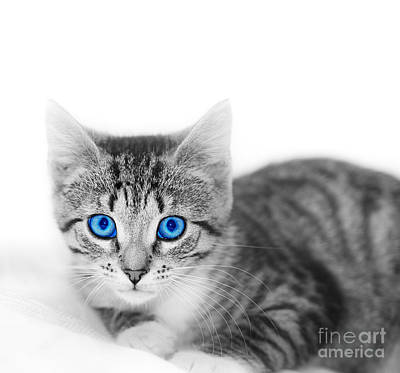 Fuzzy Photograph - Little Cute Kitten. Space For Your Text by Michal Bednarek