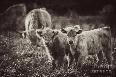 Barnyard Digital Art - Little Cuties Bw by Jacque The Muse Photography
