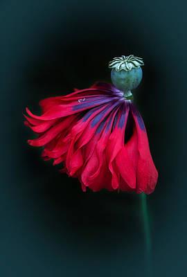 Barbara Smith Photograph - Tiny Dancer by Barbara Smith