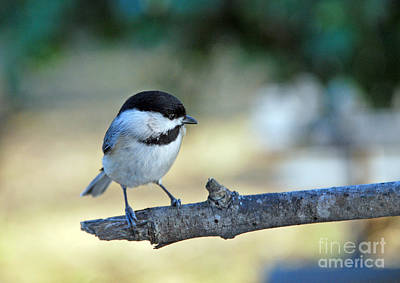 Of Birds Photograph - Little Darlin by Skip Willits
