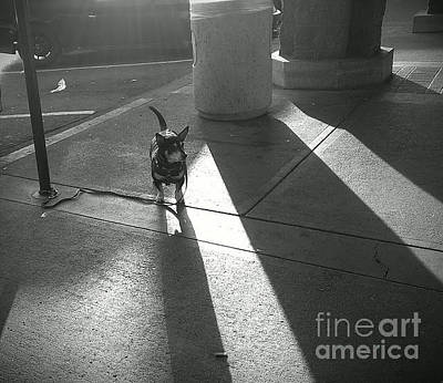 Photograph - Little Dog Big Shadow by Lennie Green