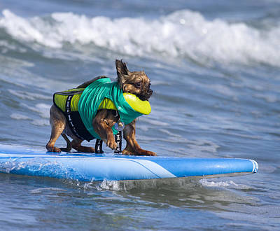 Photograph - Little Doggie On Surfboard by Nathan Rupert