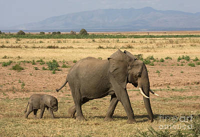 Photograph - Little Elephant Family by Chris Scroggins