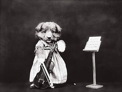 Violin Photograph - Little Fiddler by Aged Pixel