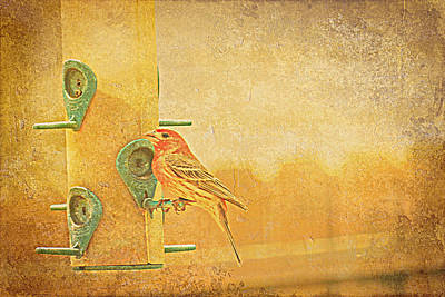 Photograph - Little Finch On A Perch by Kay Novy