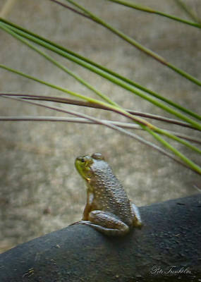 Photograph - Little Frog by Pete Trenholm