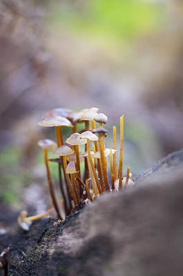 Photograph - Little Fungi World by David Isaacson
