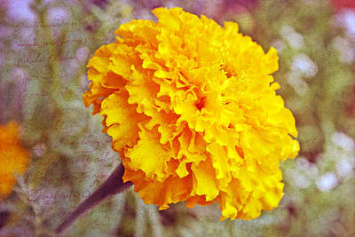 Art Print featuring the photograph Little Golden  Marigold by Kay Novy