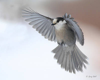 Photograph - Little Gray Angel by Gerry Sibell