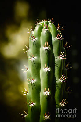 Photograph - Little Green Cactus by Julie Palencia
