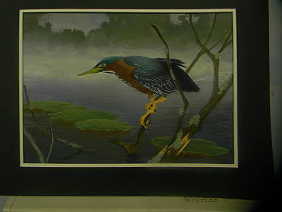 Painting - Little Green Heron Sold by Jack Bolin