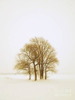 Photograph - Little Grove In Winter by Tim Good
