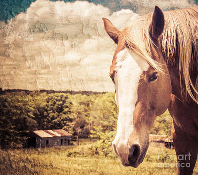 Photograph - Little Horse On The Prairie by Julie Clements