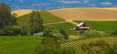 Photograph - Little House In The Vineyard by Rima Biswas