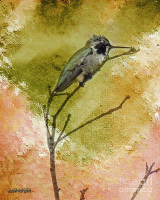 Little Hummingbird Art Print
