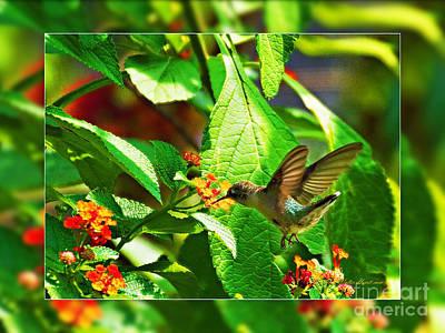 Photograph - Little Hummingbird by Walter Herrit