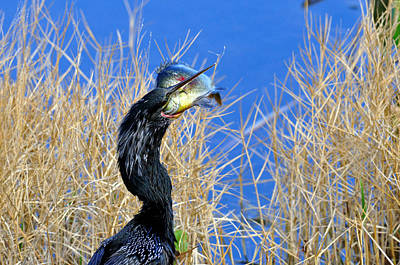 Anhinga Mixed Media - Little Hungry  by Davids Digits