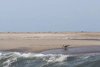 Museum Photograph - Little Island Near Cape Lookout 2 by Cathy Lindsey