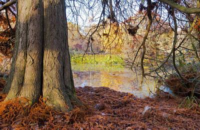 Trees Photograph - Little Lake by Maj Seda