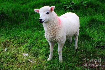 Little Lamb Art Print by Aidan Moran