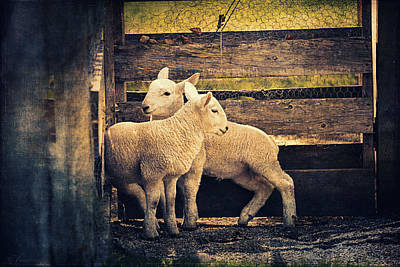 Breed Digital Art - Little Lambs Playing Together I by Maria Angelica Maira