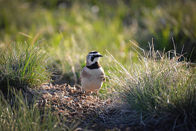 Photograph - Little Lark Big World by Ronda Broatch