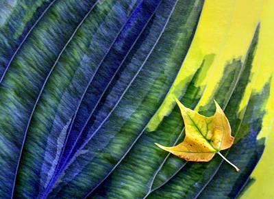Photograph - Little Leaf On Big Leaf by Carolyn Derstine