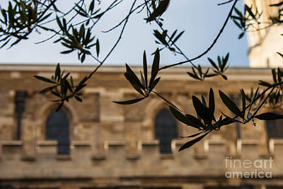 Wall Art - Photograph - Little Leaves by Sara Ricer