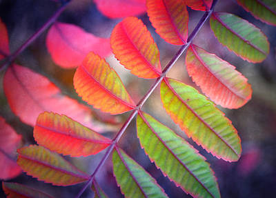 Photograph - Little Leaves by Tara Turner
